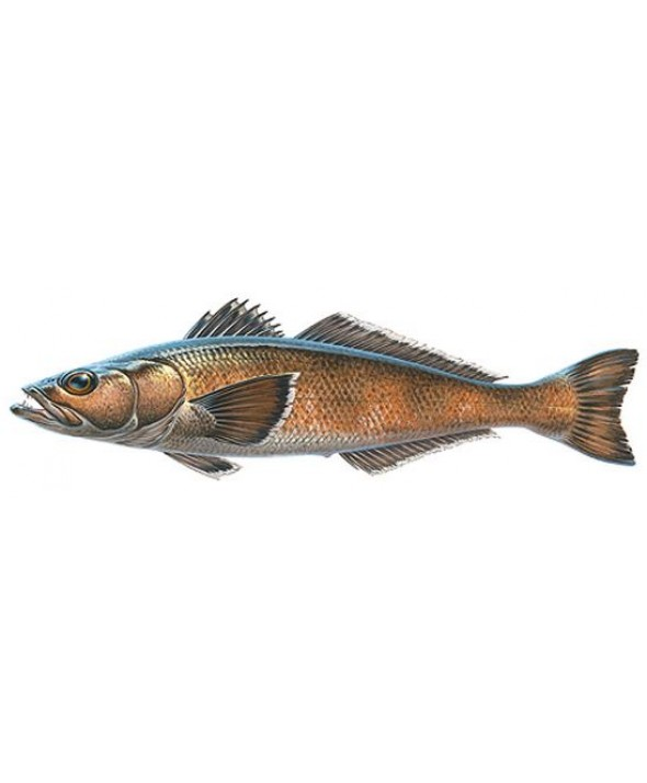 Chilean Seabass Fillet (8 oz) portions)