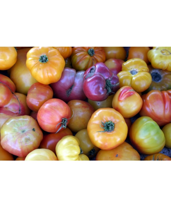 Heirloom Tomatoes (10 lbs/case)