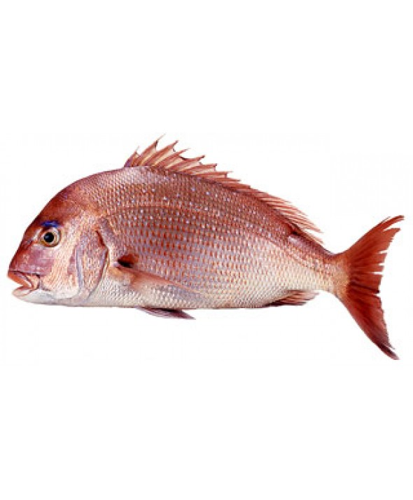 how to cook red bream fish