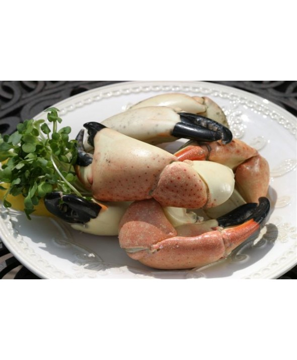 Stone Crab Claws (JUMBO)