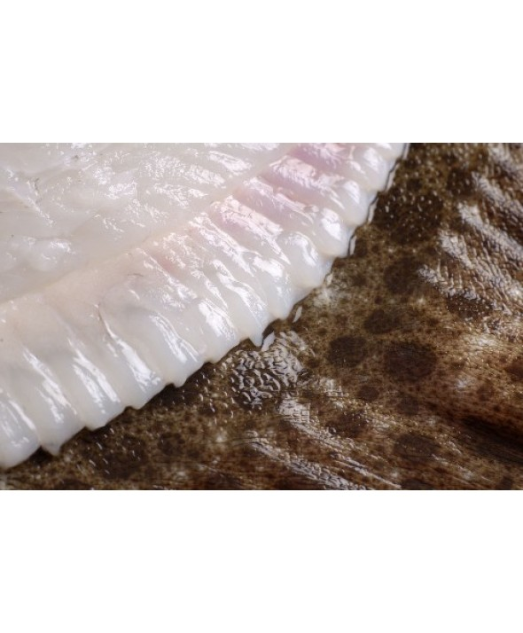 Spanish Turbot Fillets