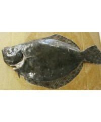 Whole Alaskan Halibut (20-20 lb)