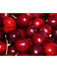 Cherries- Chile
