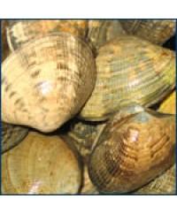 recipe: mahogany clams cost [28]