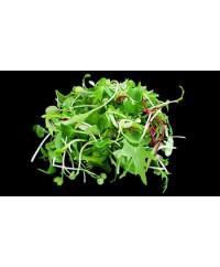 Micro Greens-  4 oz