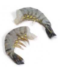 Black Tiger Shrimp (16/20)(P&D)