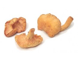 Chantarelles- Imported