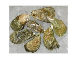 Wellfleet Oysters (100 ct)
