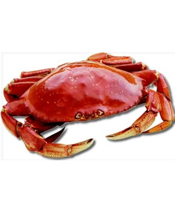 Live Dungeness Crabs