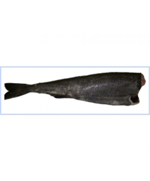 Black Cod  (5-8 lbs)