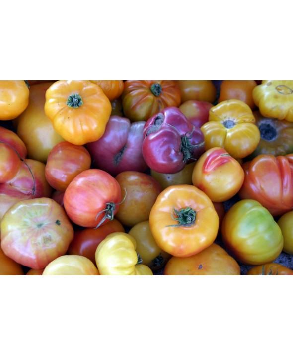 Heirloom Tomatoes (10 lbs/case)