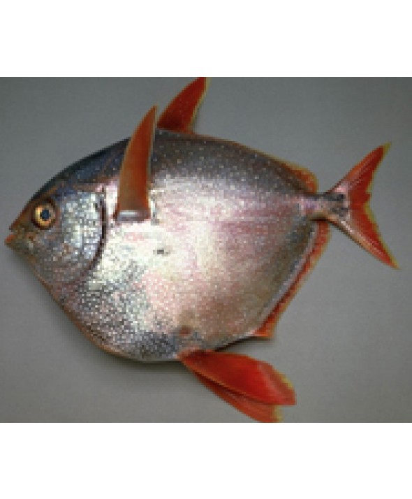 Opah (Moonfish)