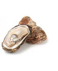 Malpeque Oyster