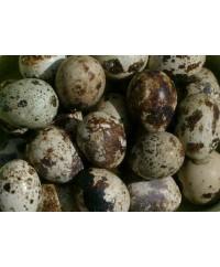 Quail Eggs (24/flat)